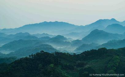 Wald mit Bergen im Nebel