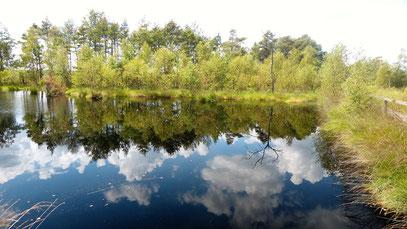 Pietzmoor, Schneverdingen, Lüneburger Heide