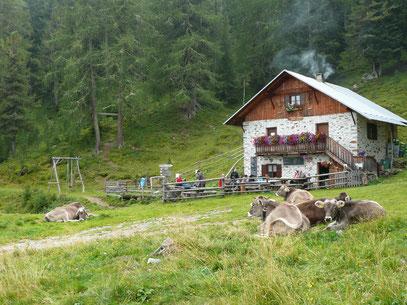 Die Alt Alm am Nörderberg in Südtirol