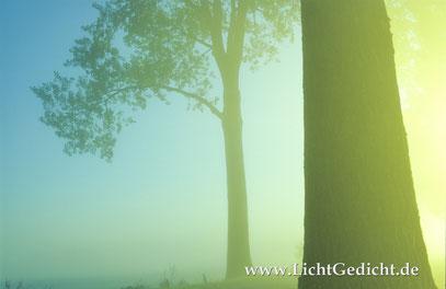 Bild 20: Pappeln (Populus) im Nebel, Nikon F 100, Nikkor 2.8/35-70mm, Kodak Elite Chrome 100 Extra Colour