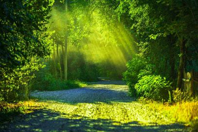 光の中を歩き続ける