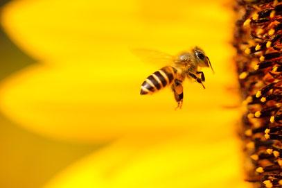 Honigspende des Imkervereins an Asylsuchende