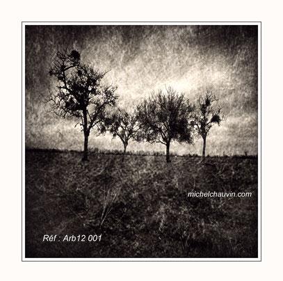 """Les 4 arbres"". Réf : Arb12 001"