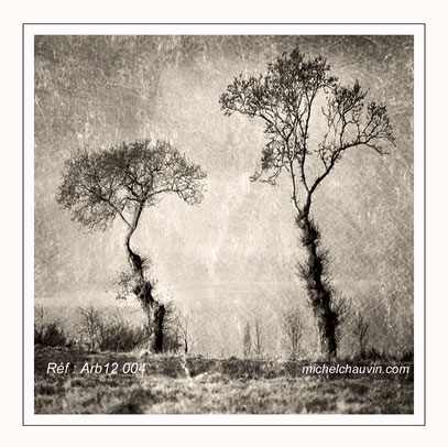 """Les 2 arbres"" Réf : Arb12 004"
