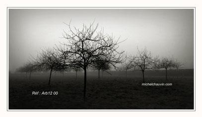 """""""Pommiers dans la brume 1"""" Réf : Arb12 008"""
