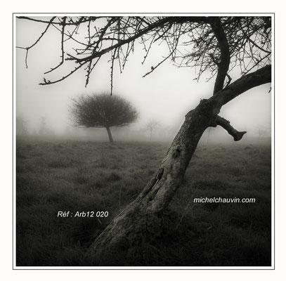"""""""Pommiers dans la brume 2"""" Réf : Arb12 020"""