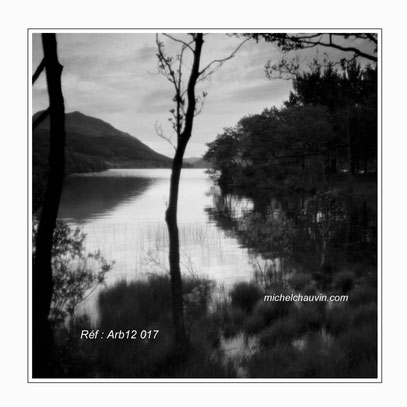 """Glen Finart"" Réf : Arb12 017"