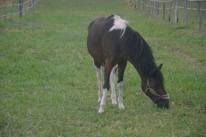 poney Diane