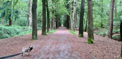 Baloe in het bos