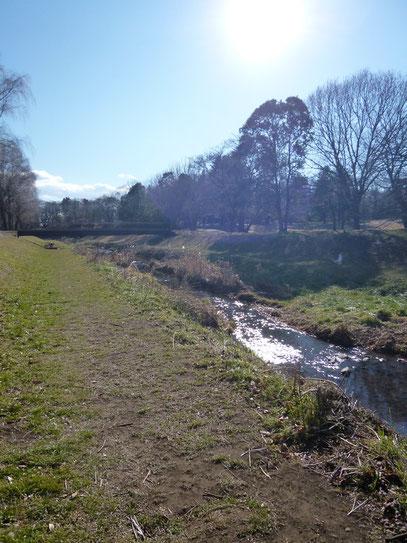 とらぬ狸の散歩〜野川沿いの風景(H24.1.5)