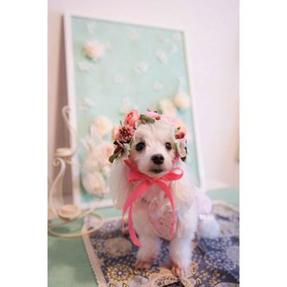 犬連れ ワークショップ ヘッドドレス