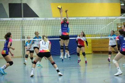 DSC 99 Volleyball Damen