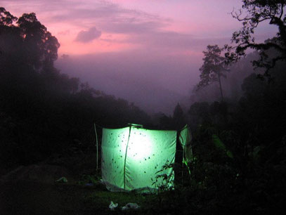 Lighttrap for insects in the rainforest