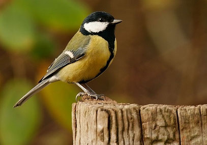 Site de rencontre oiseaux