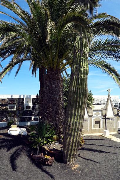 César Manriques schlichtes Erdgrab mit Grabstein, Palme und Kaktus