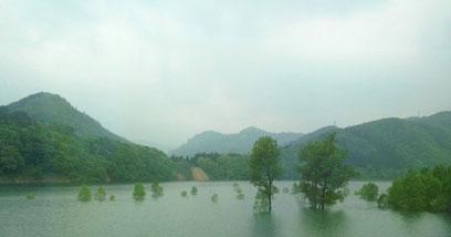 水面から伸びる木たちが不思議な感じ