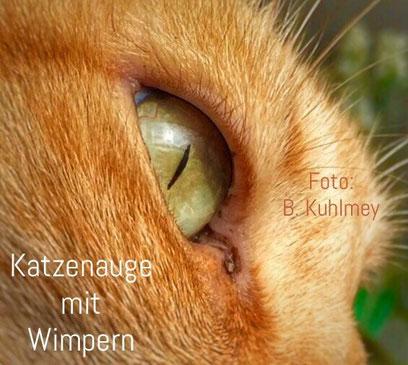 Katzenauge mit Wimpern, Foto: Birgitta Kuhlmey, 2016