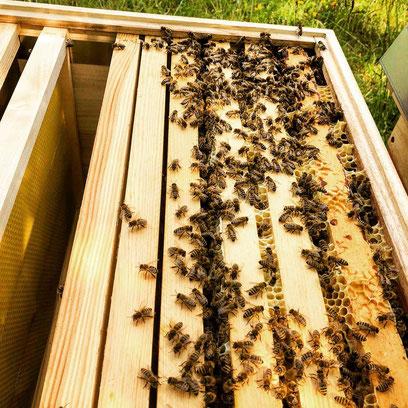 Honig vom Bio Imker