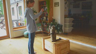 Kiwi lernt winken