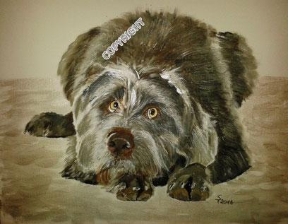 Hunde: Grauer Jagdhund liegend. Ganzkörperporträt: Hund schaut den Betrachter an. Hundekopf mit hellen Augen und braungrauer Nase liegt neben den Vorderpfoten., Tiermalerei, gemalte Tierportraits nach Fotovorlage, Tiere zeichnen lassen