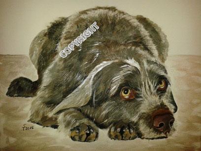 Hundeporträt: Grauer Jagdhund liegend. Ganzkörperporträt: Hund schaut den Betrachter an. Hundekopf mit hellen Augen und braungrauer Nase liegt neben den Vorderpfoten, Tiermalerei, gemalte Tierportraits nach Fotovorlage, Tiere zeichnen lassen