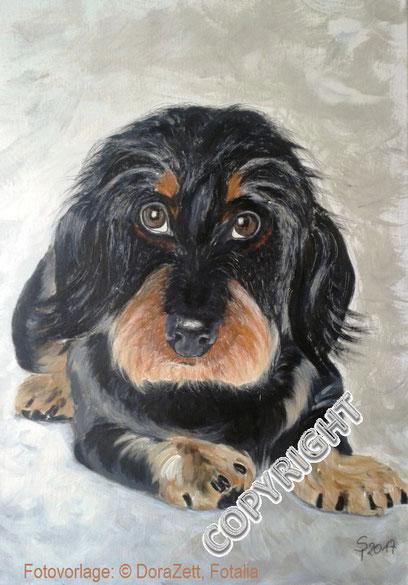 Hundeporträt, Acryl auf Leinwand, 50x70 cm, Fotovorlage: © DoraZett, Fotalia.  Rauhaardackel liegend. Hund schaut den Betrachter an. Sichtbar graubrauner Kopf mit blonder Schnauze sowie Vorderpfoten, linke Hinterpfote und Rute.