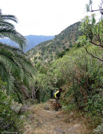 ....bereit zum Abstieg nach Vallehermoso
