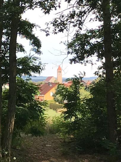 Blick vom Tegelweiher Richtung Schwarzenfeld    (Bilder: Monika Graf)