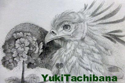 立花雪 YukiTachibana 絵画 強さを秘めた ヘビクイワシ