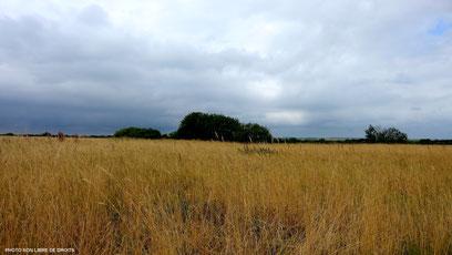 En gris et jaune paille, Baie de Somme, photo non libre de droits
