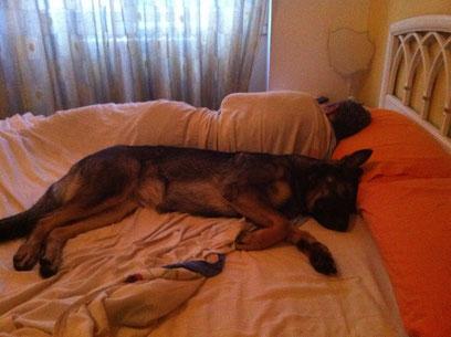 Ashanti vom Schlafgefährten