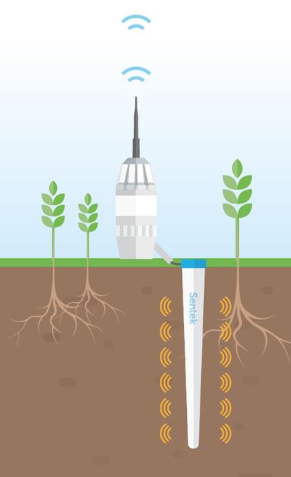 irrigation, humidté du sol, sonde capacitive, agralis, sentek