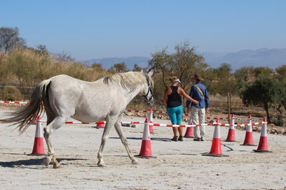 Claire Waldron teaching Positive Reinforcement Horse Training