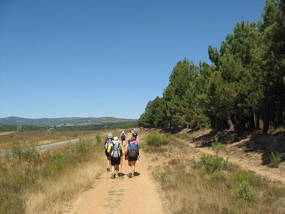 Eine Gruppe von Pilgern geht auf dem Jakobsweg durch eine Landschaft mit Bäumen, Feldern und Bergen im Hintergrund