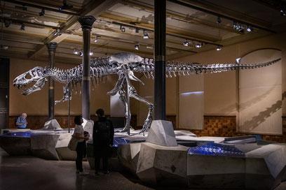 Banner, Newsletter, Tyrannosaurus rex - Museum für Naturkunde, Berlin, Dr. Ralph Oehlmann, Oehlmann-Photography