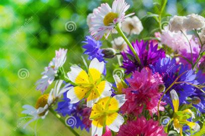 Ein Blumenstrauss
