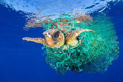 Foto denuncia tomada en las costas de Tenerife, ganadora del World Press Photo. | Francis Pérez