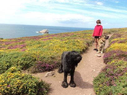 wandermoeglichkeiten-bretagne-naturliebhaber-mit-hund