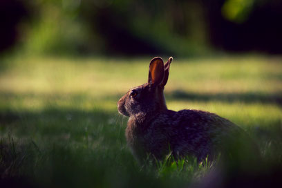 Hase Kaninchen Ziel Jagd jagen rennen