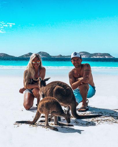 kangaroo, känguru, australien, australia, lucky bay