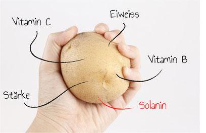 Die Kartoffel hat einiges zu bieten: Trotz Solanin.