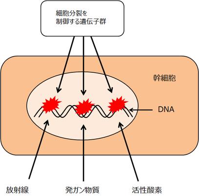 発ガン誘発因子によるDNAの損傷