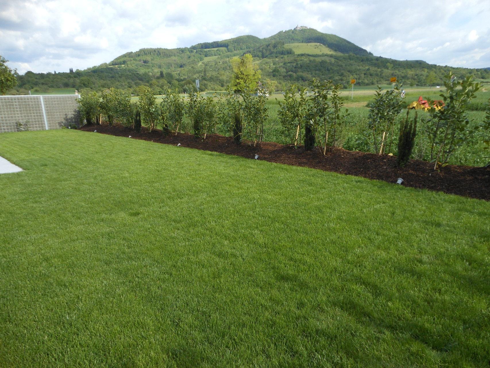 pflanzung fertigrasen garten und landschaftsbau sch nbeck. Black Bedroom Furniture Sets. Home Design Ideas