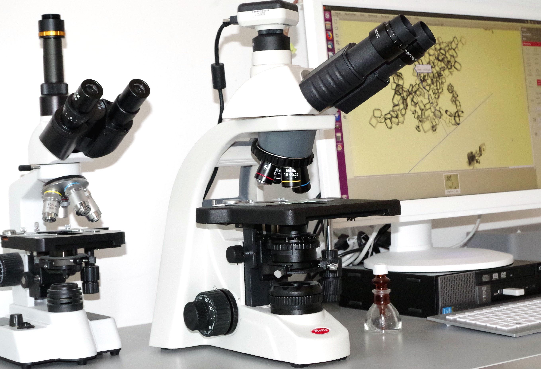 Trinokular mikroskop beim tierarzt tierarzpraxis in schwerin