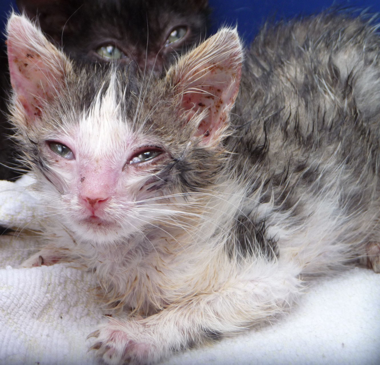 Katzenschnupfen Ehrenamtliche Katzenhilfe Lkr Cham E V