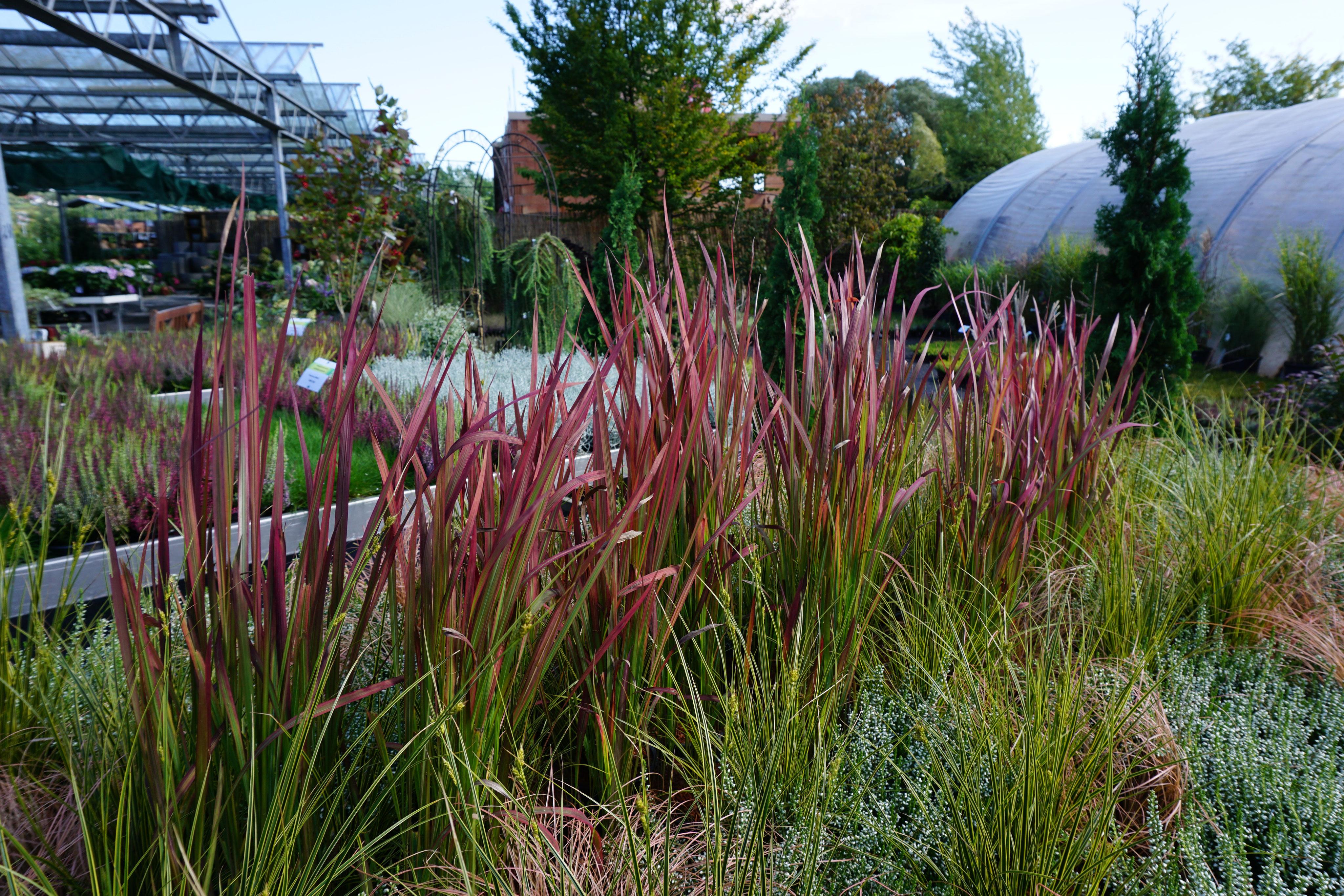 Gräser und Bambus - Pflanzenhof Nordshausen