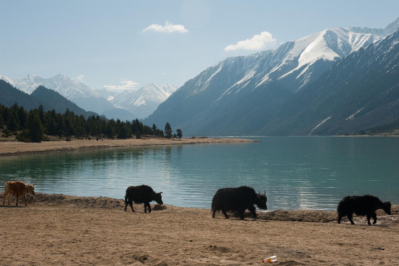 Tibet Heute