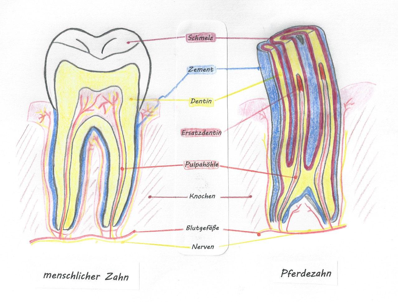 Zahnbehandlung beim Pferd - eine Notwendigkeit oder modischer ...