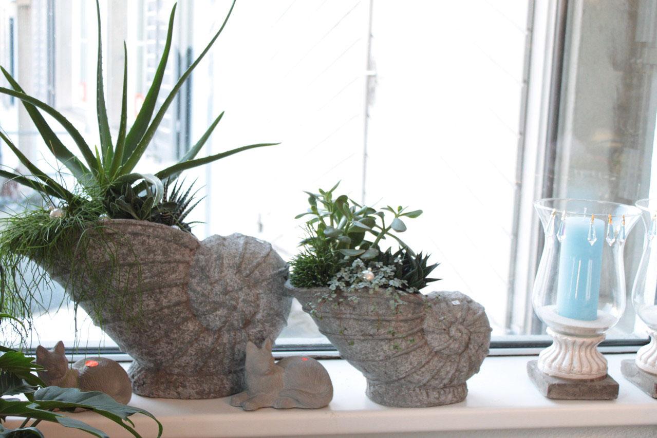 pflanzen gepflanzte schalen blumen. Black Bedroom Furniture Sets. Home Design Ideas