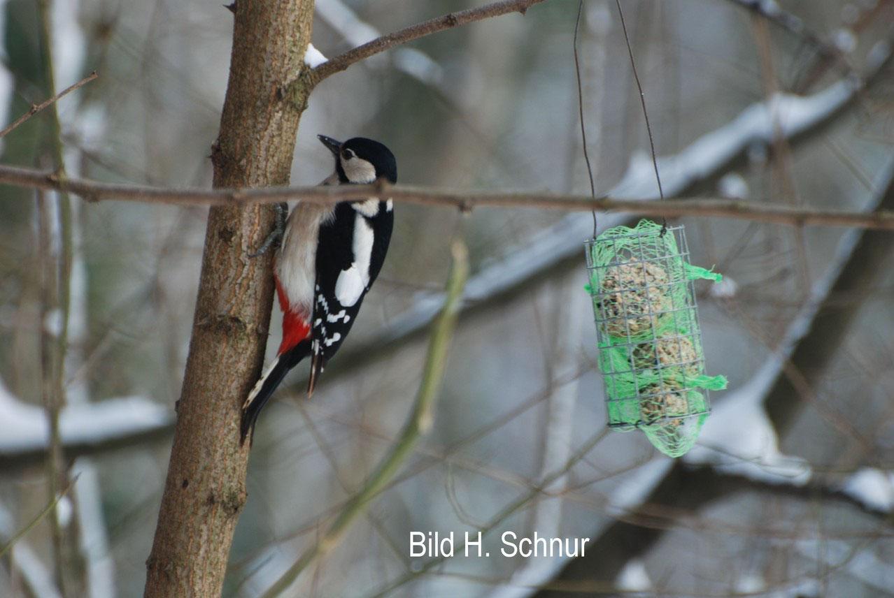 winterfütterung von vögeln - nabu kreisverband darmstadt